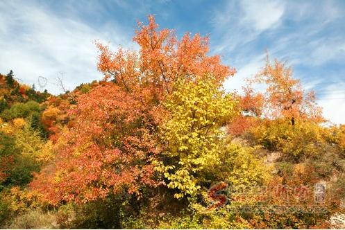 新闻 正文    有人说看山西芦芽山的风景,最佳季节是秋季,这句话一点
