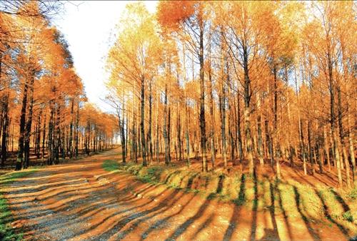 森林小路风景梦幻