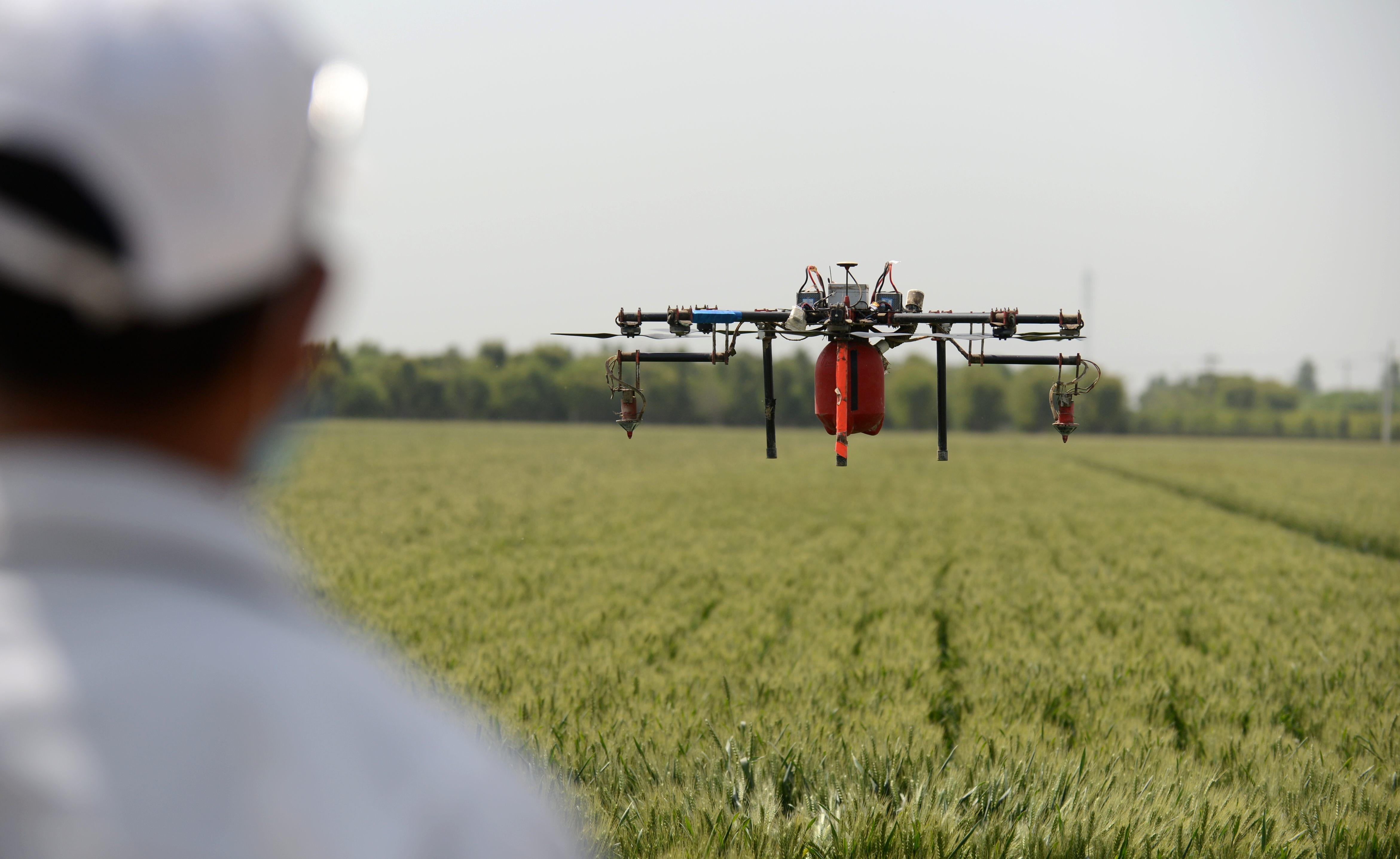 门联合飞防企业,利用无人植保飞机对小麦进行大规模喷药作业.